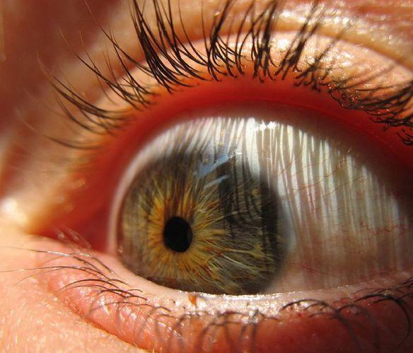 702px-Eyeball_(sugarpond)